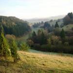 Altburgtal-Wacholder Schönecker Schweiz